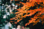 5 Tips to Ease into Fall