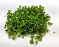Watercress Young (2.5 oz)