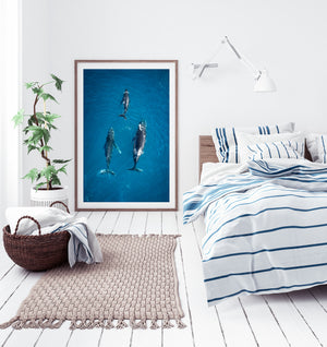 3 Whales migrating home Coolum framed fine art
