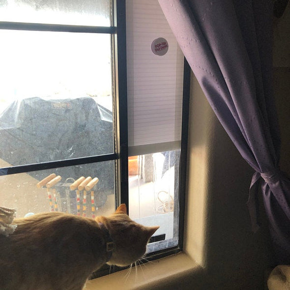Window Insert for Cat's new from Pop-Up Pet Door