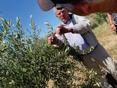 Richard with Olive Tree