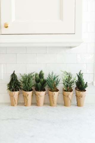 Potted Green Holiday Trees Wrapped in Kraft Paper