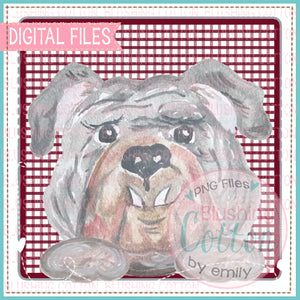 GRAY BULLDOG FACE IN MAROON SQUARE DESIGN WATERCOLOR PNG BC