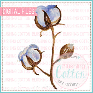 COTTON BOLL WATERCOLOR ART PNG
