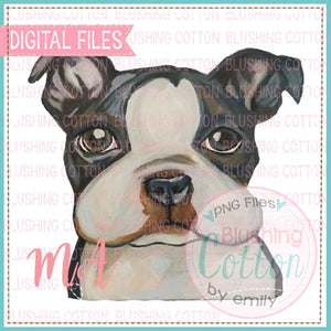 BOSTON TERRIER BCMA