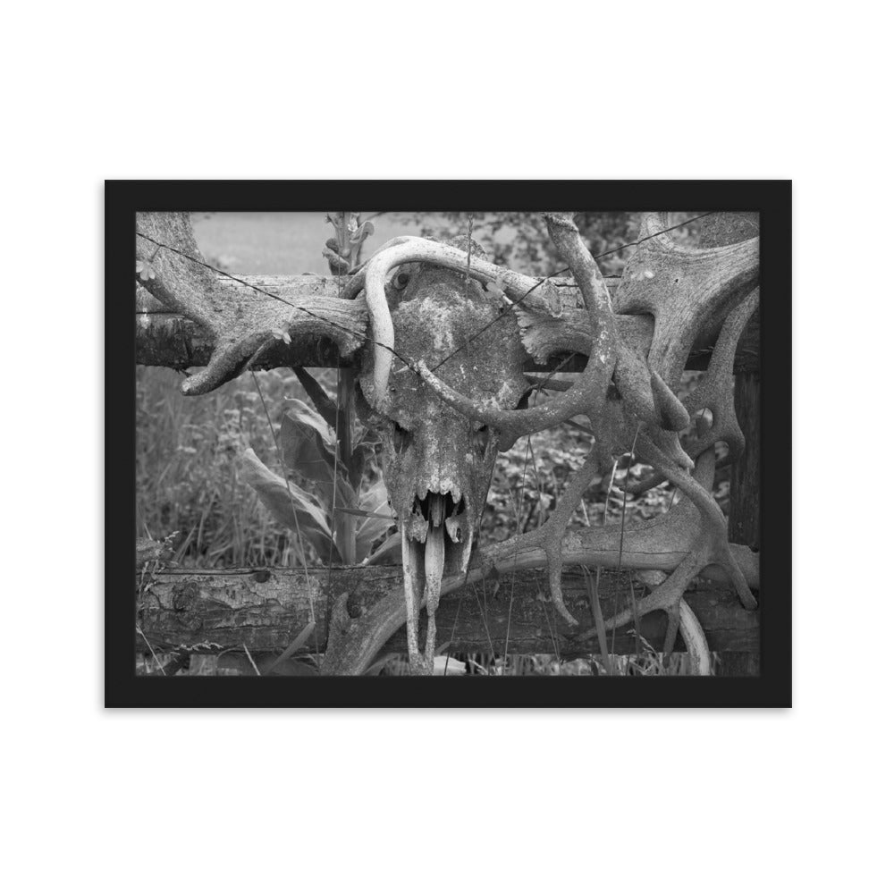Black And White Photography Art - Deer Horns