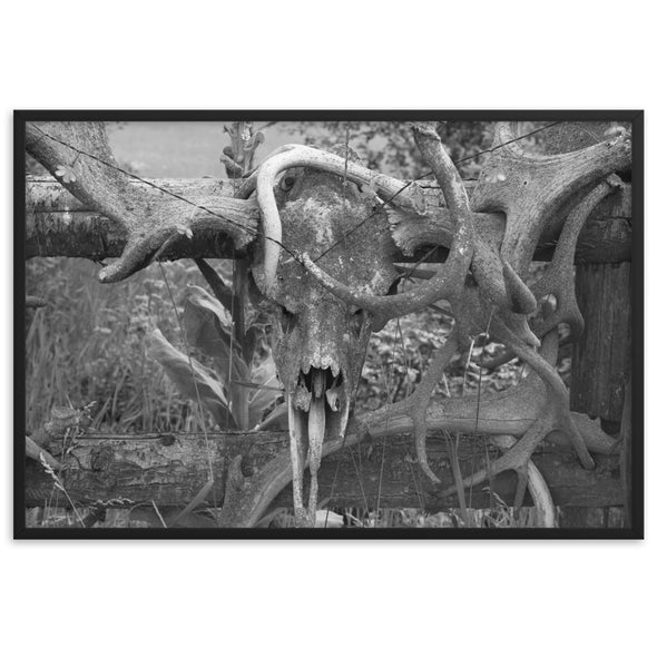 Deer Horns Black And White Poster