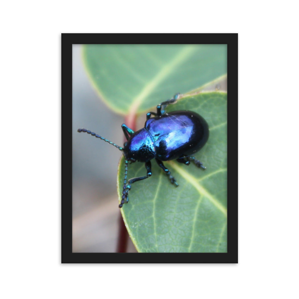 Blue Bug Photo