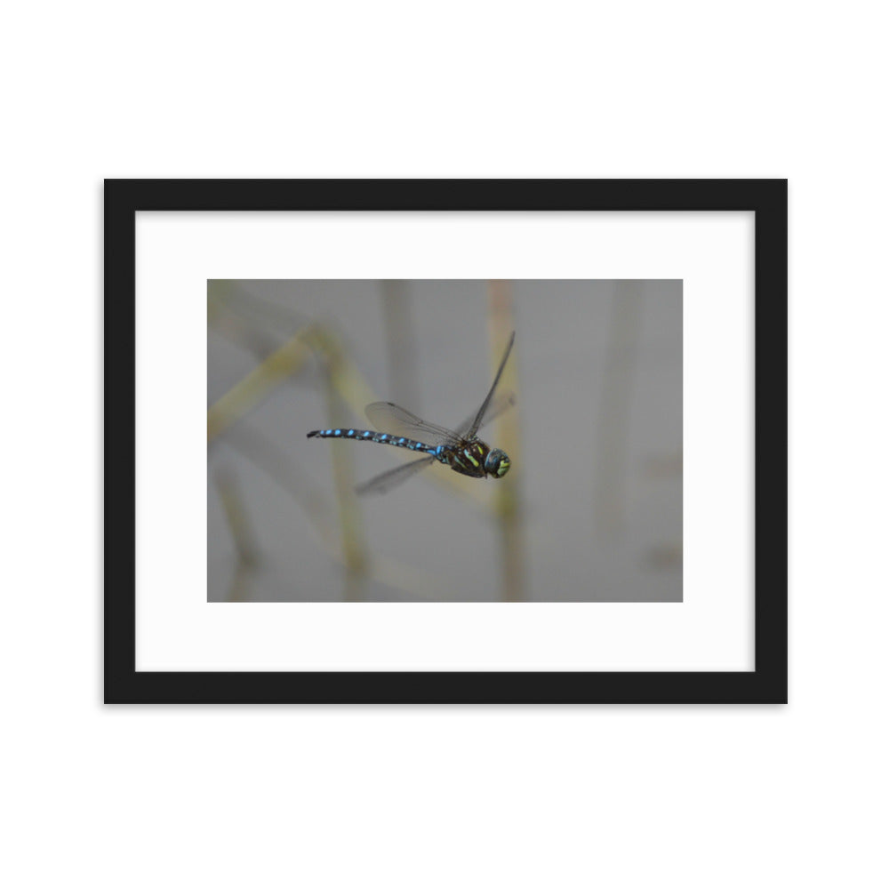 Dragon Fly in Whistler, Canada