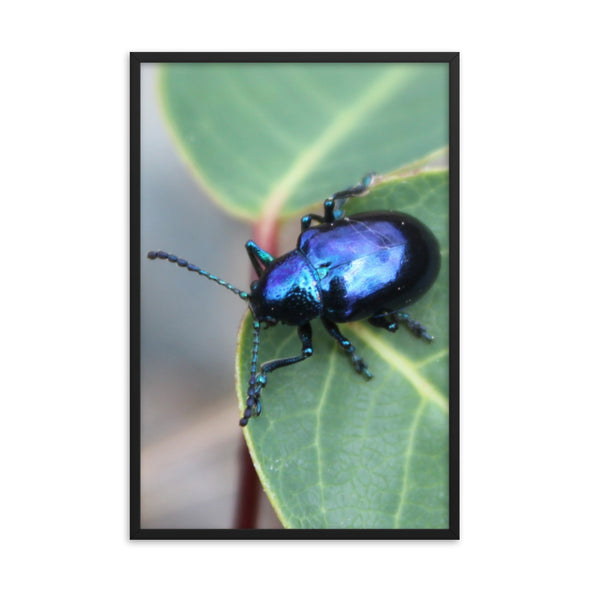Blue Insect Poster