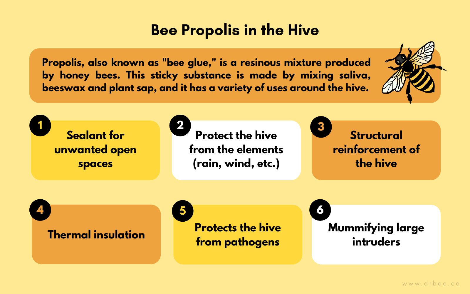 Bee Propolis Uses in the Hive