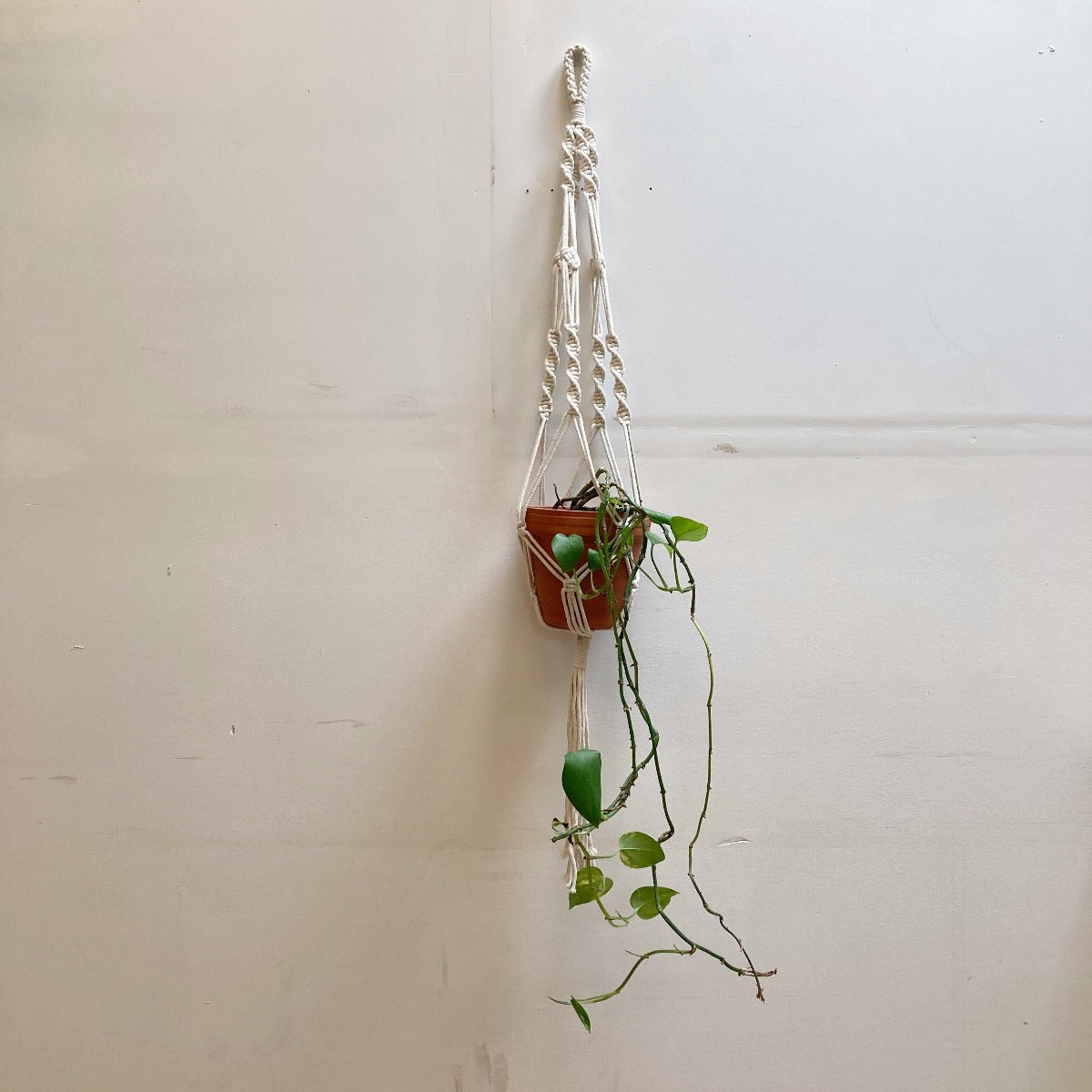 Hunter & Hare Single Hanging Plant Macrame Holder with Plant