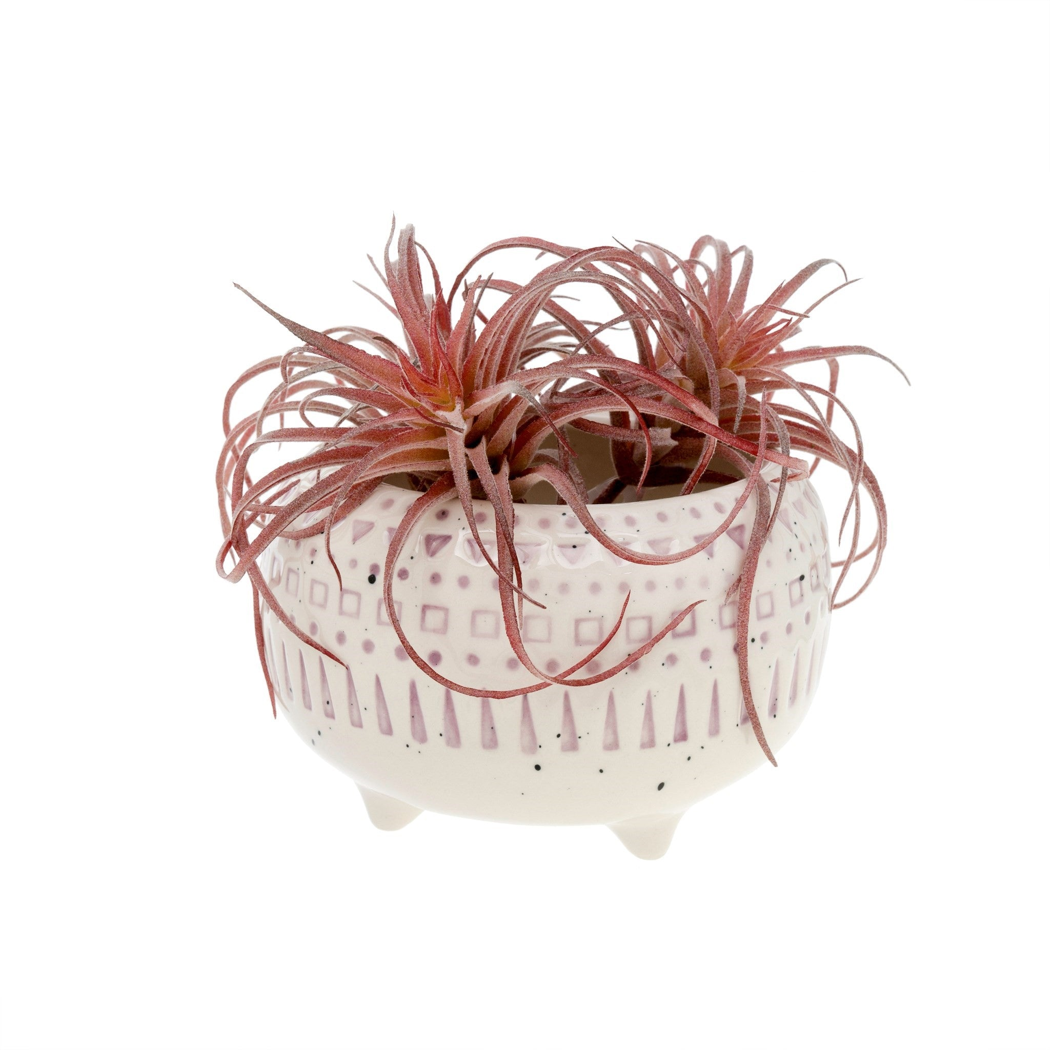 Indaba Trading Co Florentine Bowl Air Plants