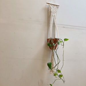Hunter & Hare Dowel Single Plant Macrame Hanger with Plant