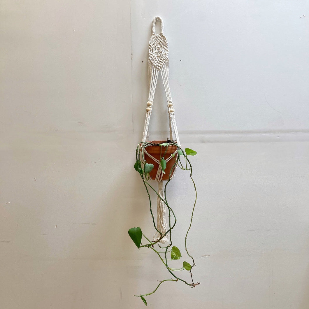 Hunter & Hare Braided & Beaded Single Hanging Plant Macrame Holder with Plant