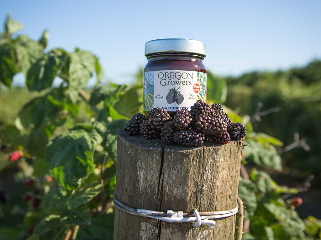Oregon Growers Marionberry Jam jar surrounded by marionberries in the field