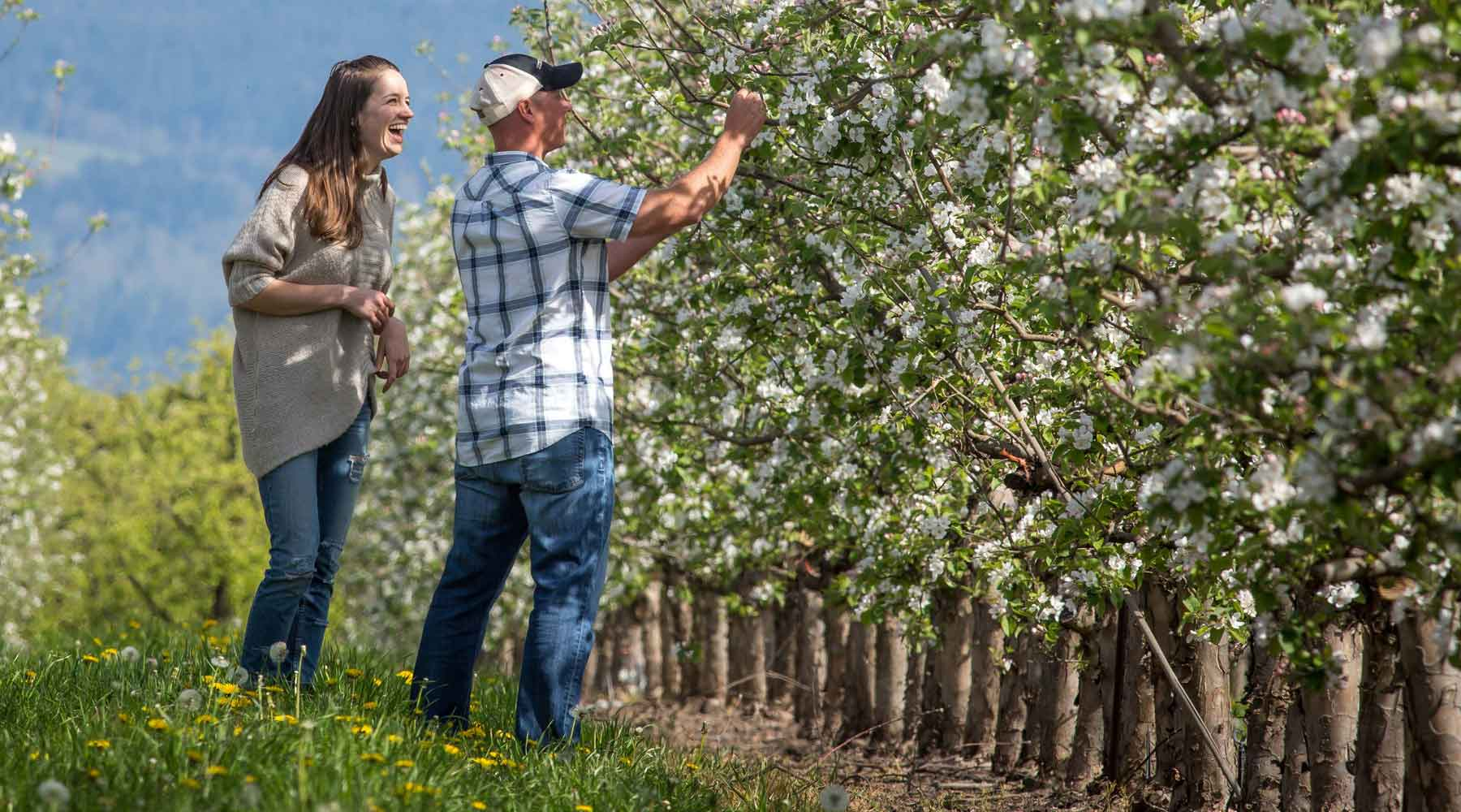 Founder Dave Gee in an Orchard Verifying NON GMO compliance