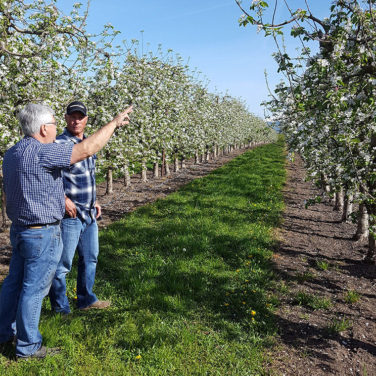 Dave Gee and orchardist in Hood River, Oregon, pear orchard