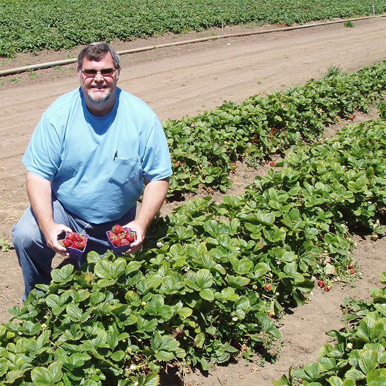 Oregon Growers farmer in strawberry field
