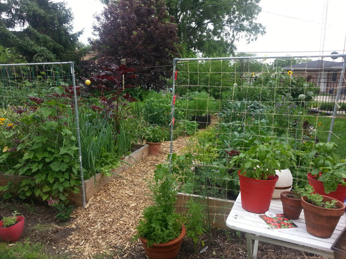 Planning An Urban Garden Farm Part 1