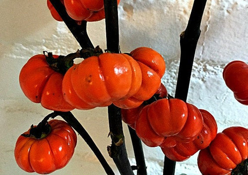 Pumpkin on a Stick -- Ornamental