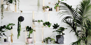 How to propagate indoor plants