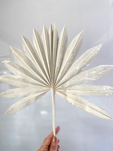 Dried Sun Palm