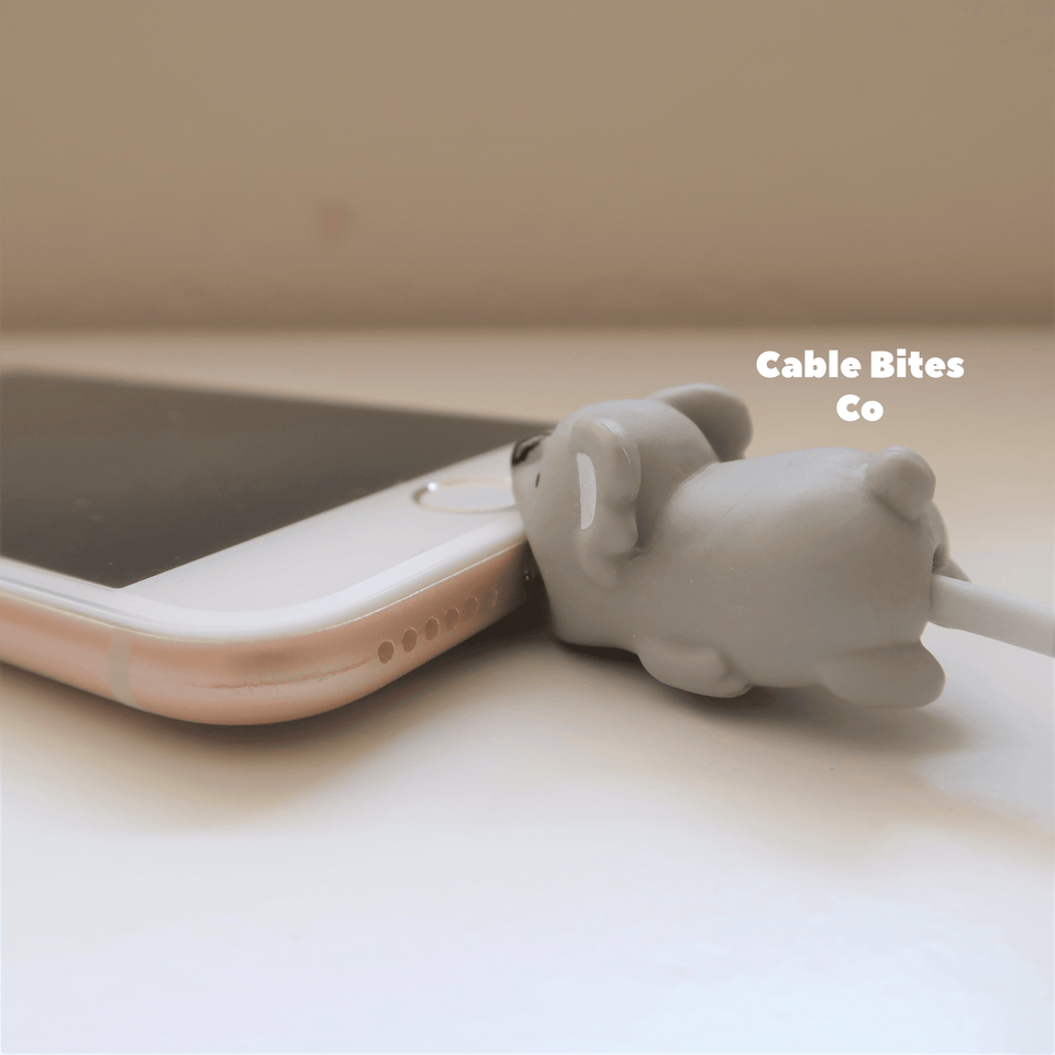 Cable Animal Bites - Koala