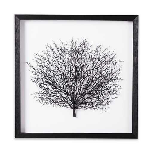 Black sea fan Shadow box frame