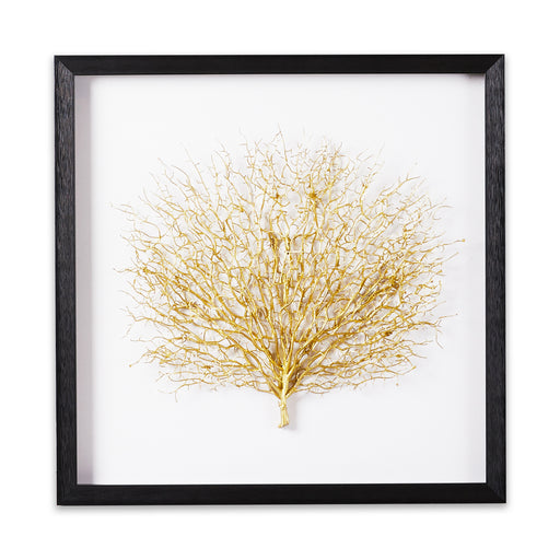 Brass sea fan Shadow box frame