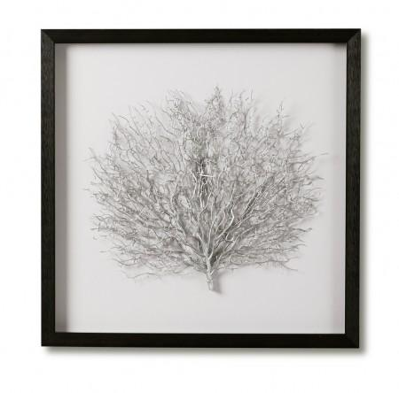 Silver sea fan Shadow box frame
