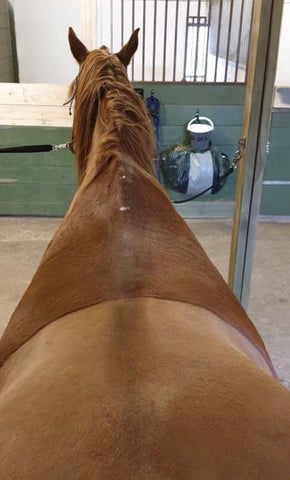 image of a back of a horse