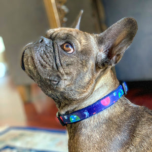 Frenchie Supply Collar - Outer Space