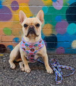 Frenchie Supply Harness - Delicious Donuts