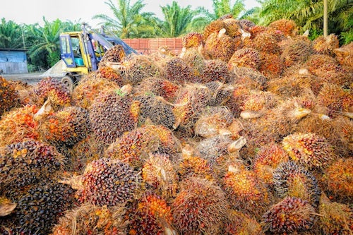 Why We STILL Don't Use Palm Oil