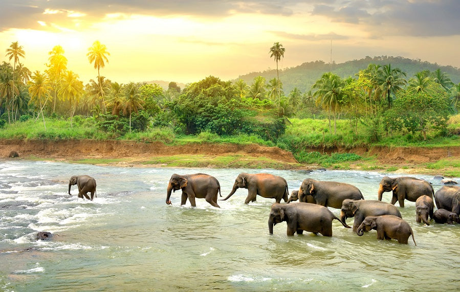 Elephant family crossing a river.