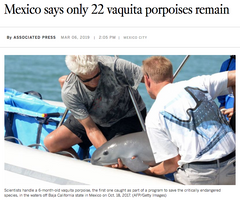 Only 22 Vaquita Porpoises Left