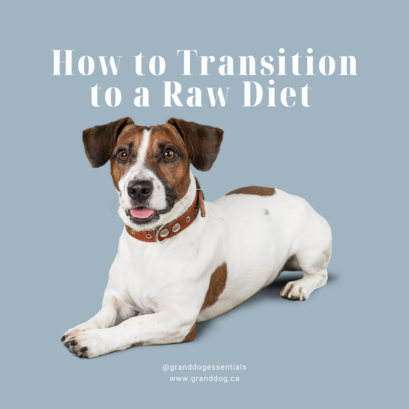 How to Transition Your Dog to a Raw Food Diet