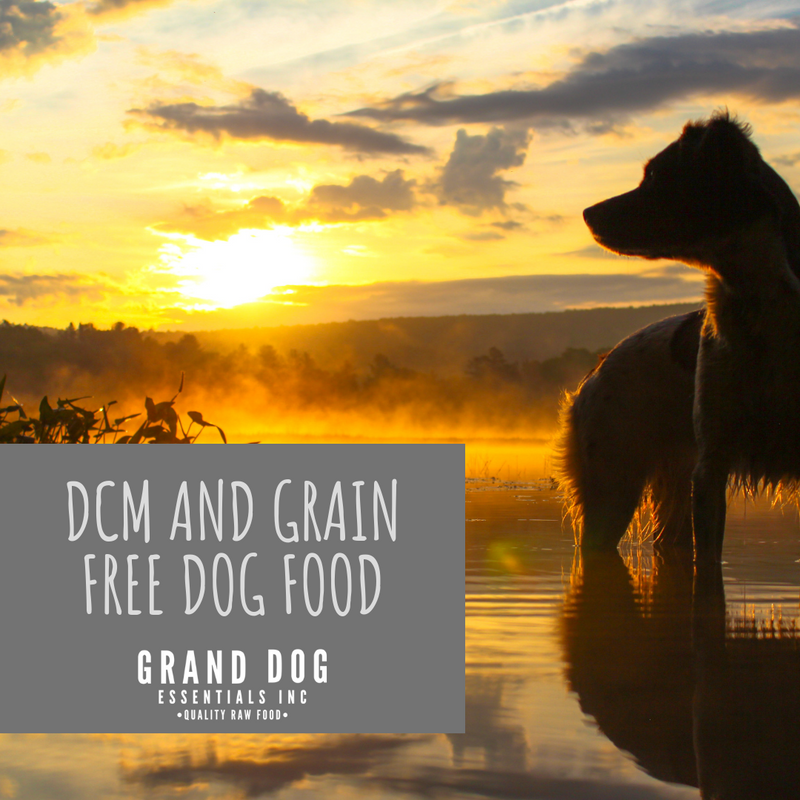 What You Need to Know About DCM and Grain Free Dog Food
