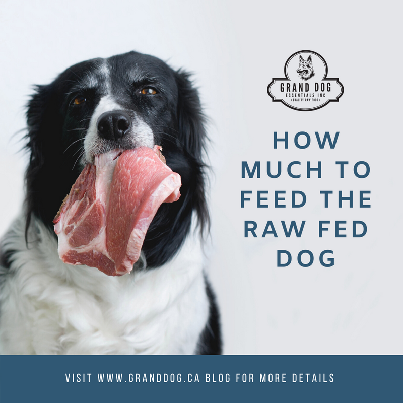 How Much to Feed the Raw Fed Dog