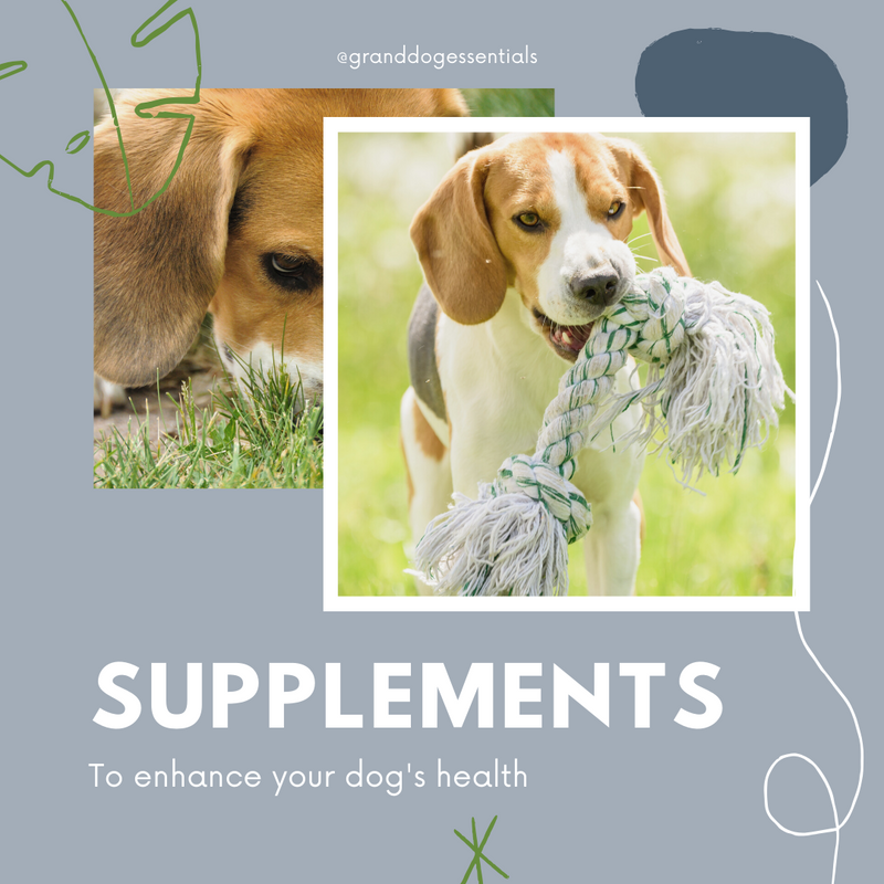 Supplements to Enhance Your Dog's Health