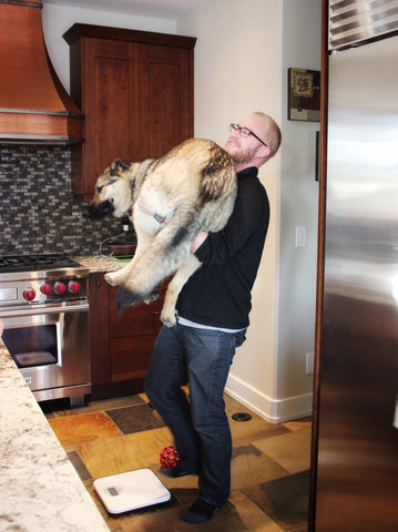 Man standing carrying large german shepherd dog.  Is about to step onto a scale to weigh the dog.