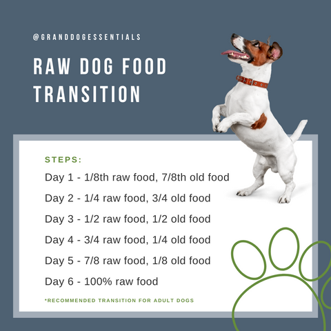 Raw Dog Food Transition