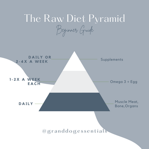 Raw Dog Food Pyramid for Beginners