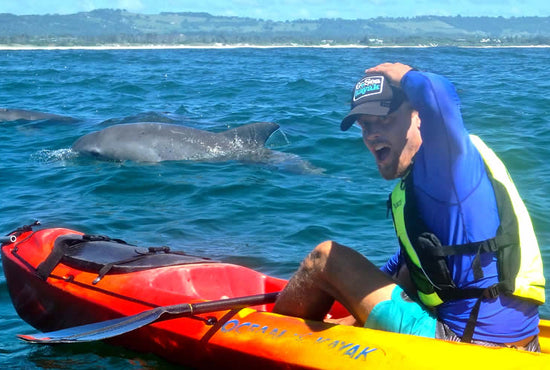Byron Bay Sea Kayaking with Dolphins