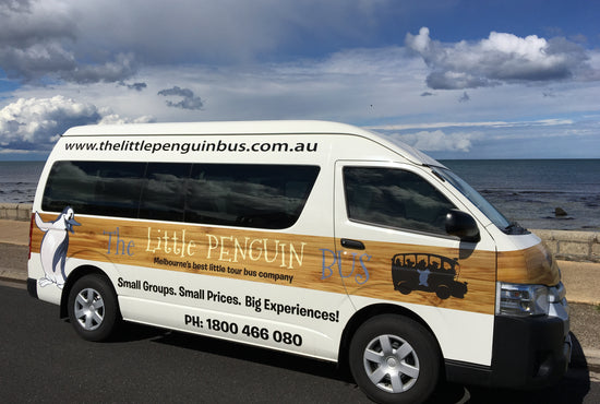 Phillip Island Small-Group Penguin Express