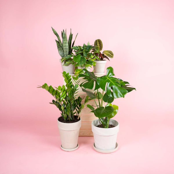 Plant Potpourri – Urban Jungle