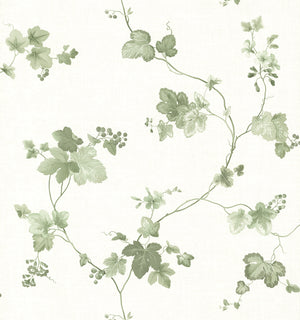 Symon Green Leaf Trail Wallpaper-Trails of green grape leaves curl about a cream background in this pleasant wallpaper with Faded hues and a slightly distressed background