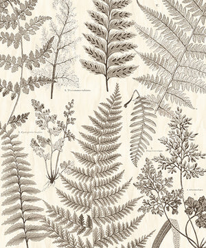 Herbarium Black Wall Mural-various sized leaves with a grey scale design with a warm beige background.
