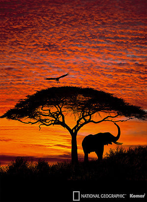 Komar African Sunset Wall Mural-SKU#4-501-silhouette of an elephant, bird, and tree against a brilliant African sunset.